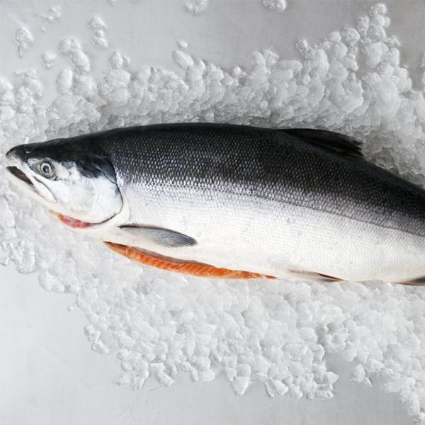 SalmonWhole
